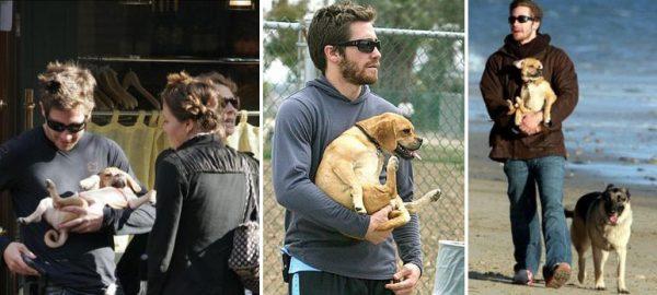 Джейк Джилленхол с собаками