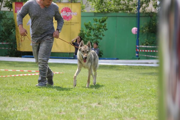 Воспитание волчака