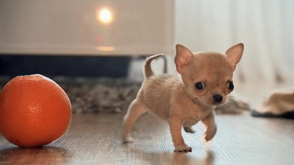 Туди и апельсин