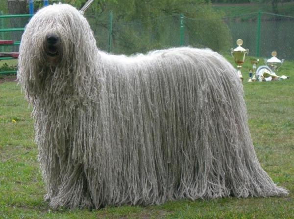 Венгерская овчарка