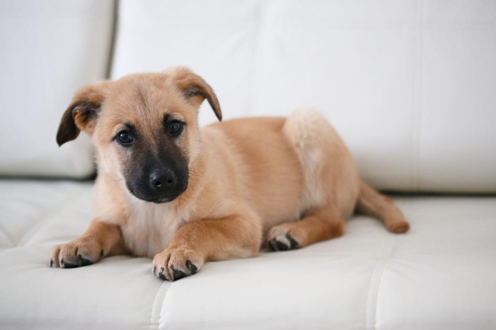 Определить по картинке породу собаки