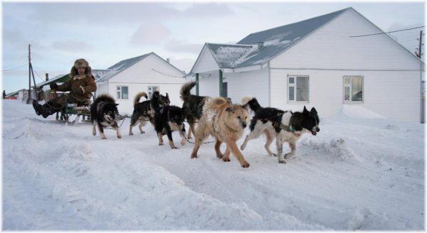 Собачья упряжка на улице полярного посёлка