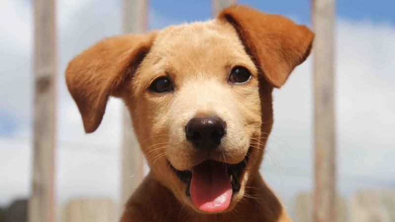 Прикольные клички для собак — выбираем смешное имя питомцу