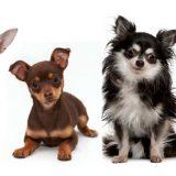 Собаки маленьких пород