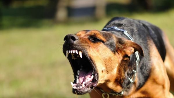 Нападающая собака