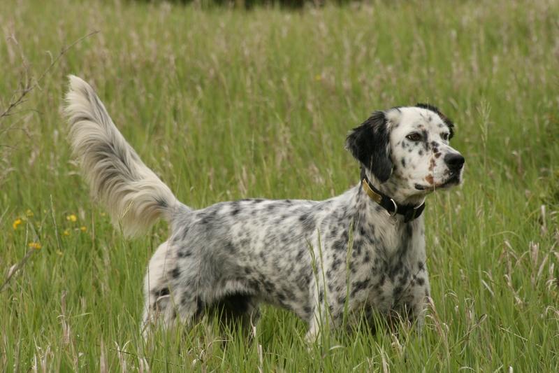 Клички для охотничьих собак