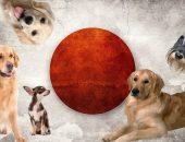 Флаг Японии и собаки