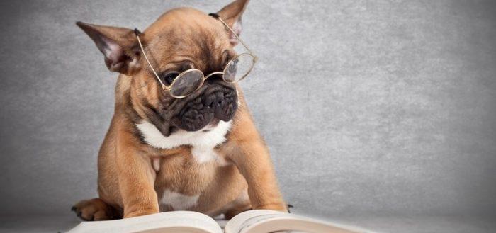 Собака в очках и с книгой
