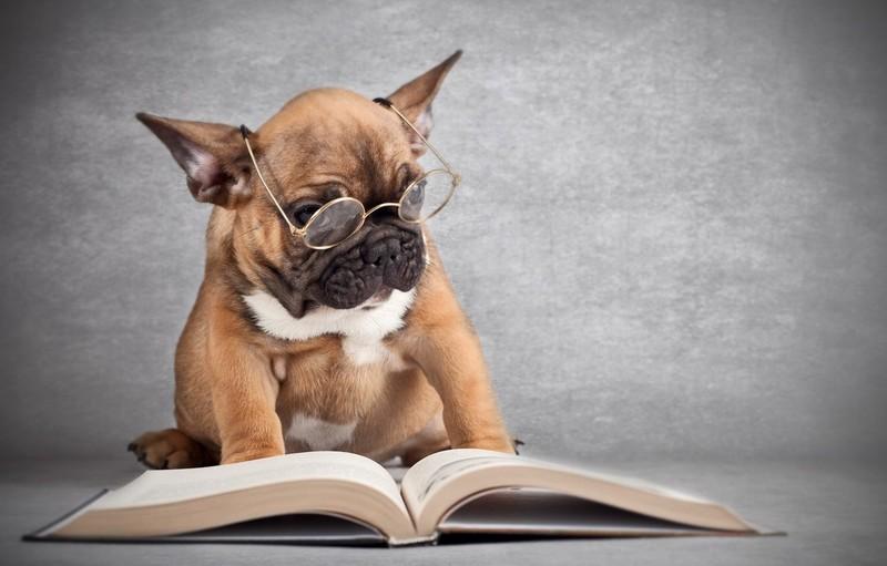 Как назвать собаку-девочку: особенности выбора имени