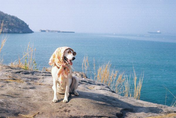 Собака у берега