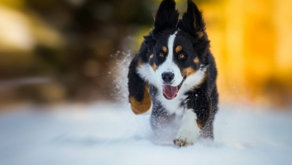 Собака бежит по снегу