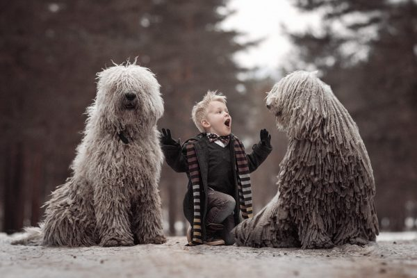 Собаки и мальчик