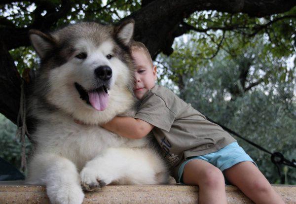 Маламут с ребёнком