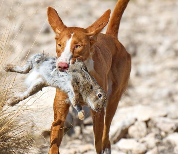 С зайцем в зубах