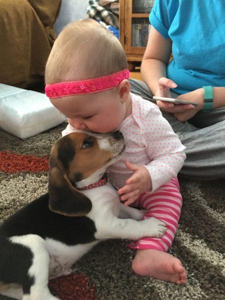 Бигль и ребёнок