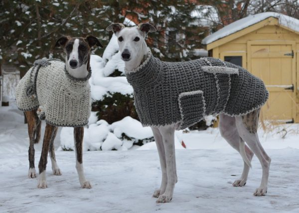 Грейхаунд в свитере