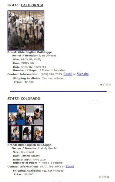 Цены на щенков Староанглийского бульдога