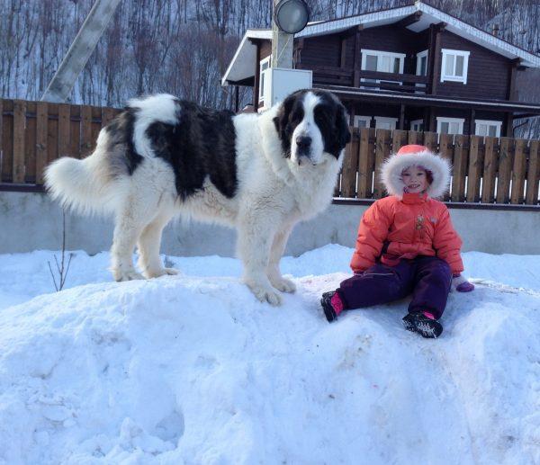 Пиренеец и ребёнок в снегу