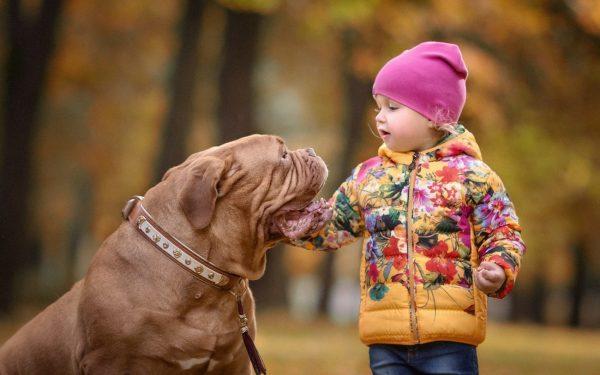 Бордос и ребёнок