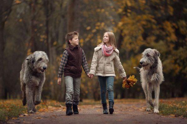Вольфхунды и дети
