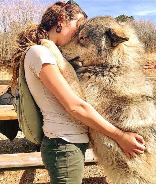 Девушка и волкособака