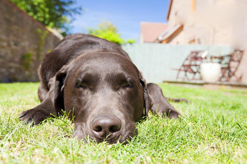 Как помочь собаке пережить жаркое лето: эффективные и работающие способы