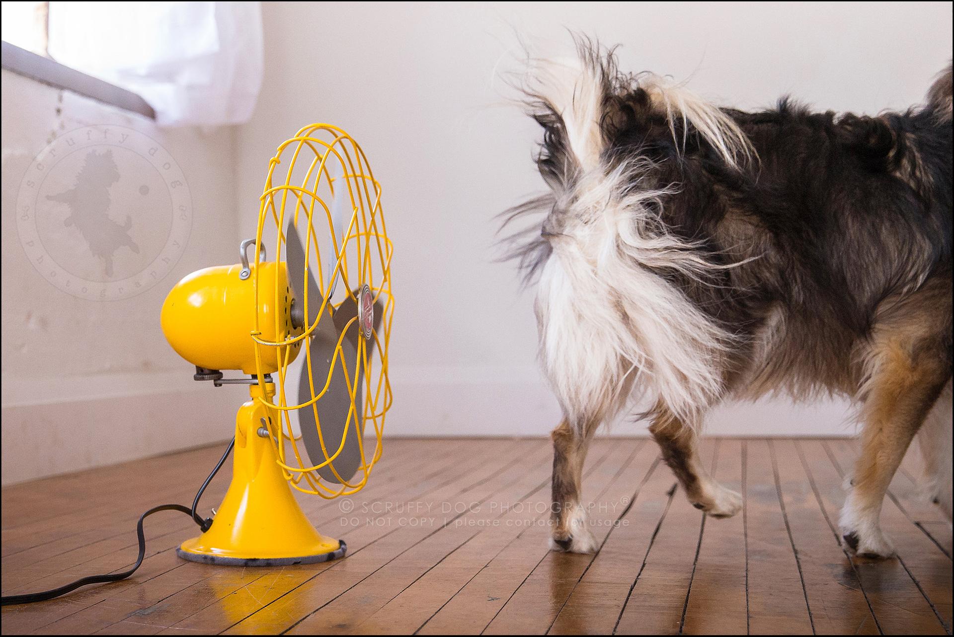 Картинка собака с вентилятором