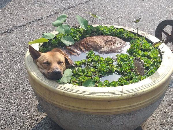 Собака в вазоне