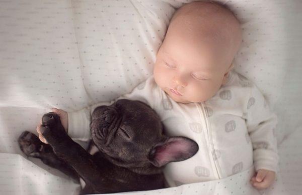 Бульдог и малыш