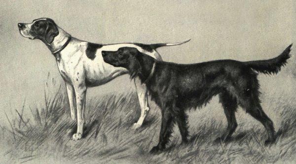 Старинное изображение легавых