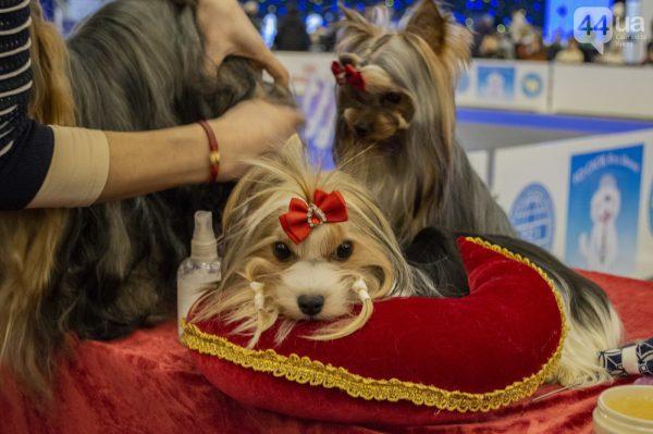 Конкурс красоты среди собак