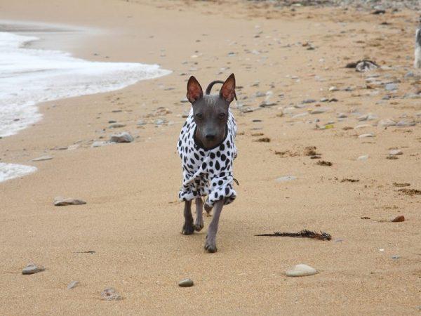 Ксоло на пляже