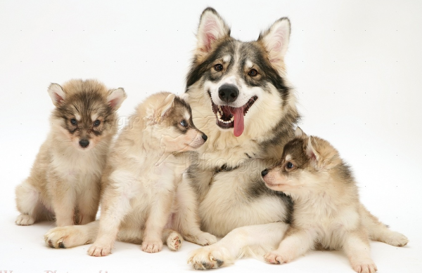 Утонаган со щенками
