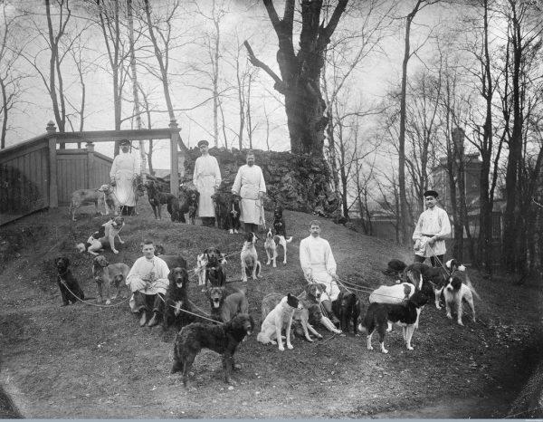 Собаки Павлова