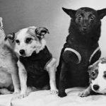 Звёздные собаки