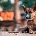 Дворовая собака