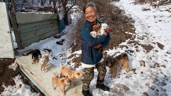 Человек и много собачек