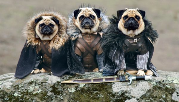 мопсы игра престолов
