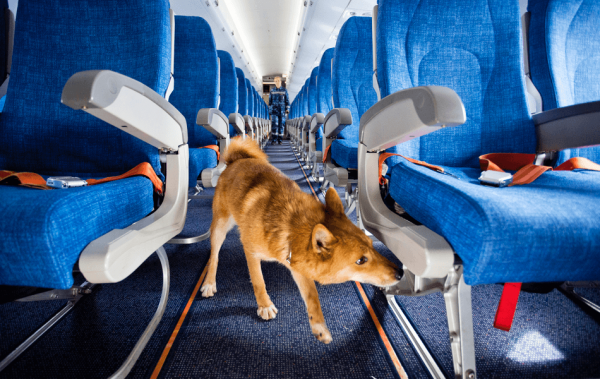 Шалайка в самолёте