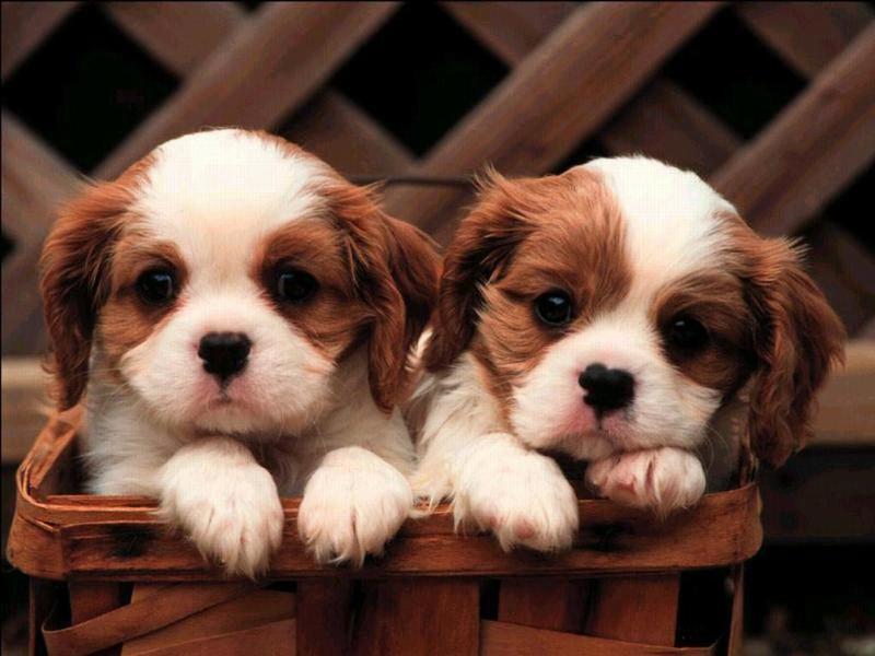 Топ-10 милых пород собак