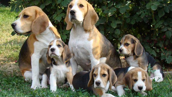 Собаки со щенками