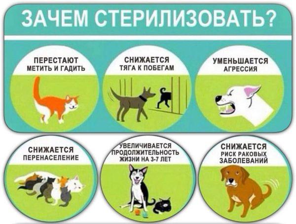 Зачем стерилизовать животных