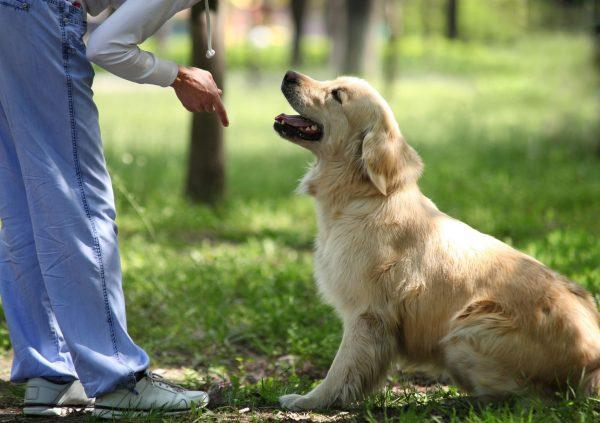 Человек даёт команду собаке