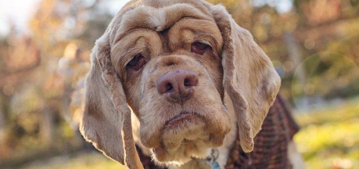 Старенькая собака