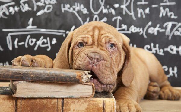 Собака с книгами