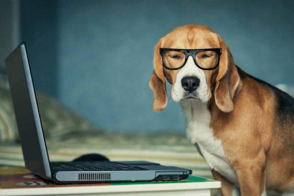 Собака за компьютером