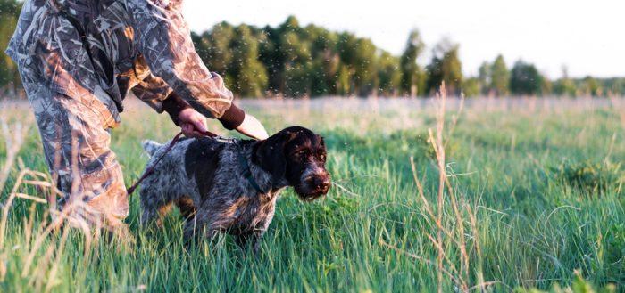 Собака с охотником в поле