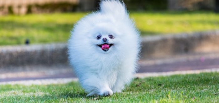 Собака как облако