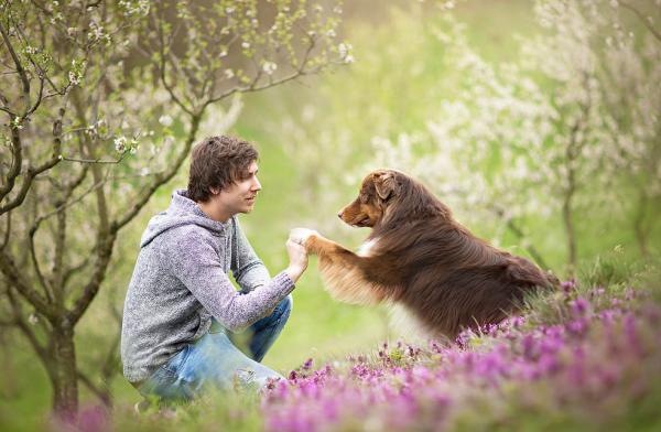 собака и человек 1