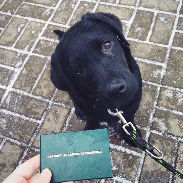 Удостоверение на собаку-поводыря